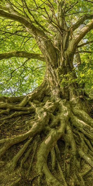 tree-3385957_640